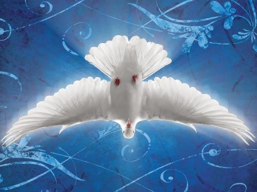 dove_of_peace_wings_spread_50_head_down.jpg